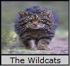 Best Places to See Scottish Wildcats